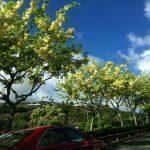 ようやく落ち着けたハワイ最終日。花を愛で、サンセットに心を動かされつつ帰路に
