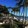 ハワイの椰子の木と、ロサンゼルスの椰子の木はどう違う?