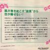 嵐 Blast in JAL? 日本航空の中にも嵐のハワイコンサート情報が