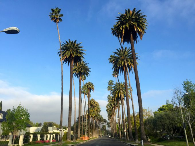 ビバリーヒルズの椰子の並木
