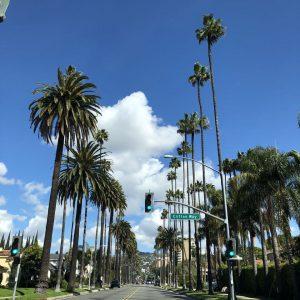 palmtreesdoheny
